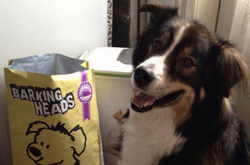 Собака кушает корм