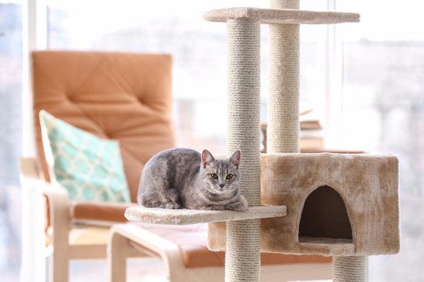 Выбираем большие домики для кошек больших размеров