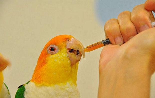 как дпвать энторосгель попугаю сообщением