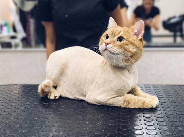 Профессиональная стрижка собак, кошек котов и йорков на дому и в зоосалоне