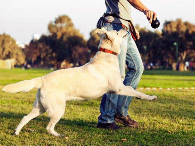 Самые интересные игры с собакой
