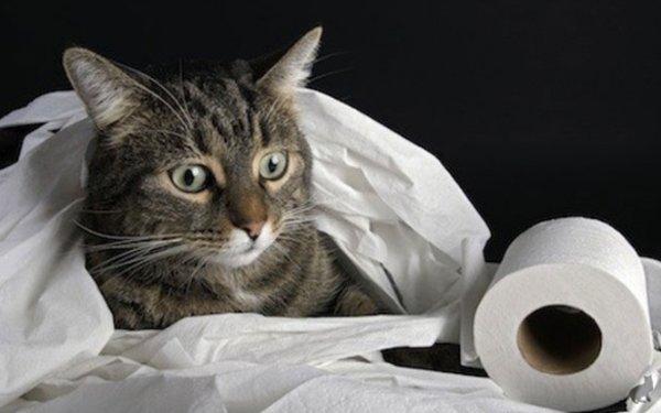 Кот гадит в неположенном месте причины и методы борьбы