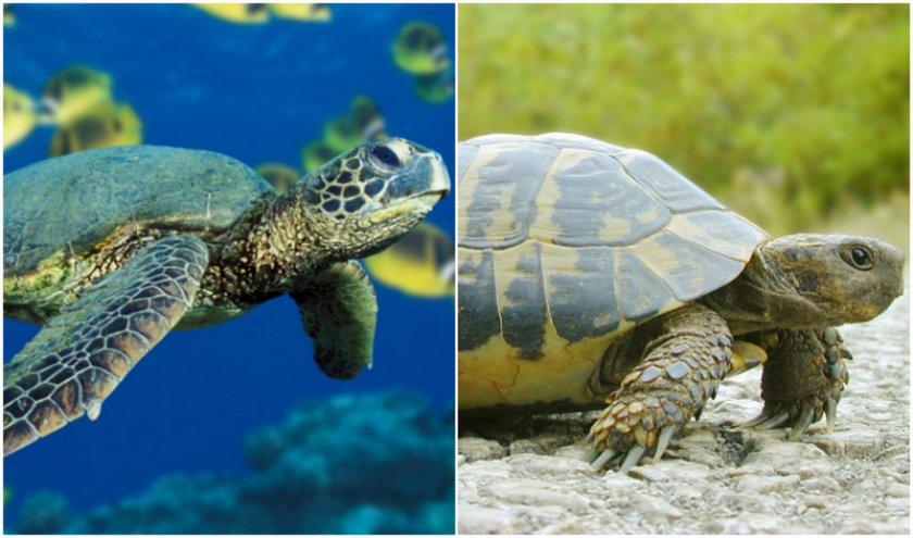 Морские и сухопутные черепахи