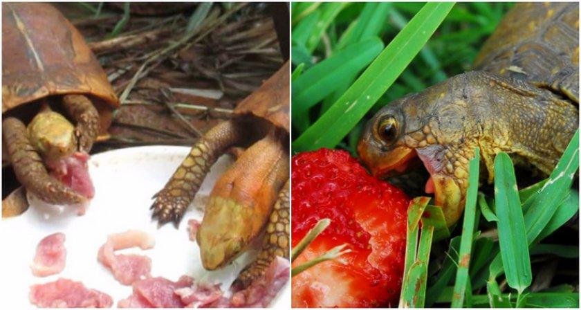 Животная и растительная пища