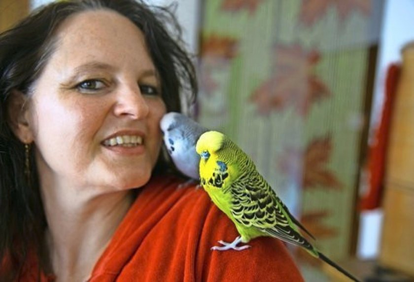 Как приучить попугая к имени
