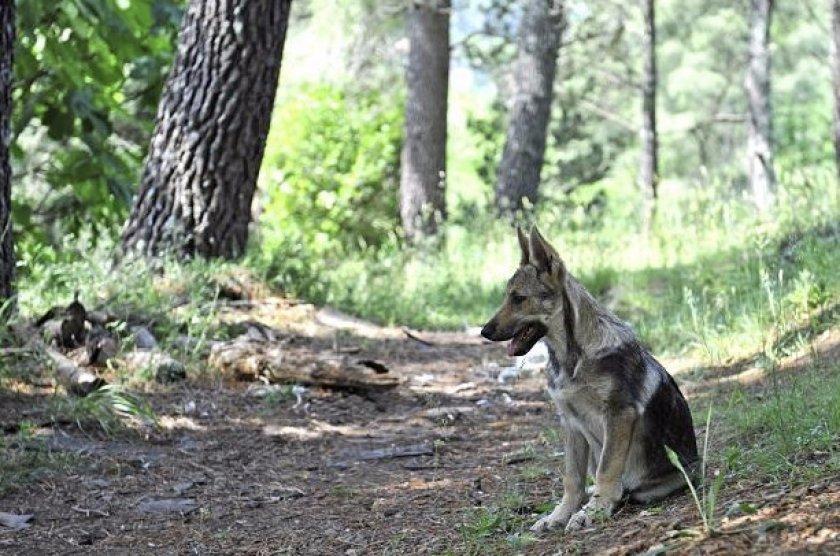 Пропала собака в лесу