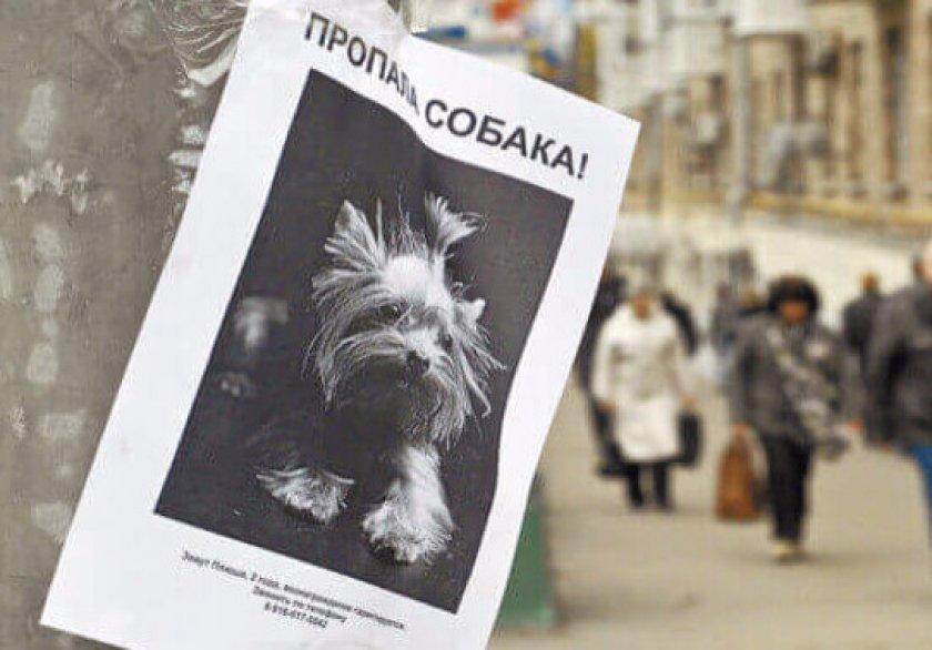 Пропала собака