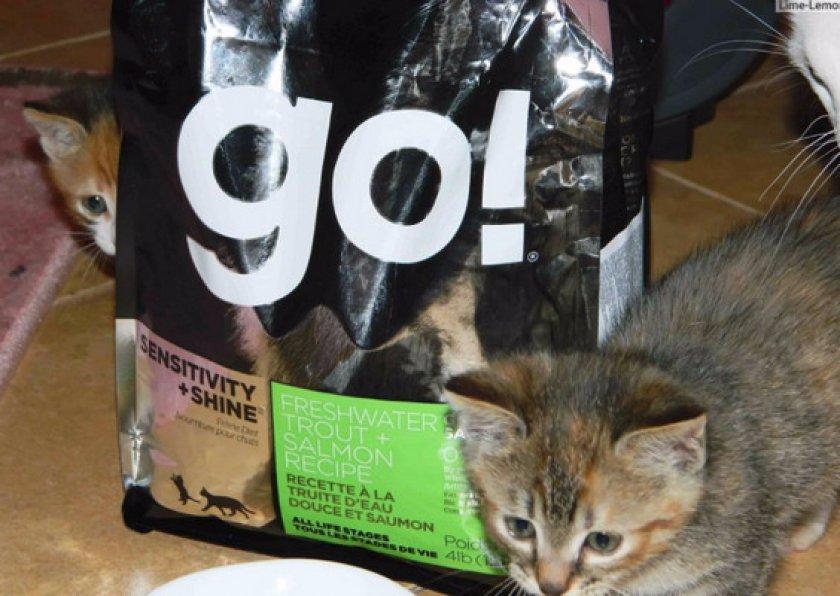 Корм Go Natural Holistic беззерновой для котят и кошек с чувствительным пищеварением с форелью и лососем