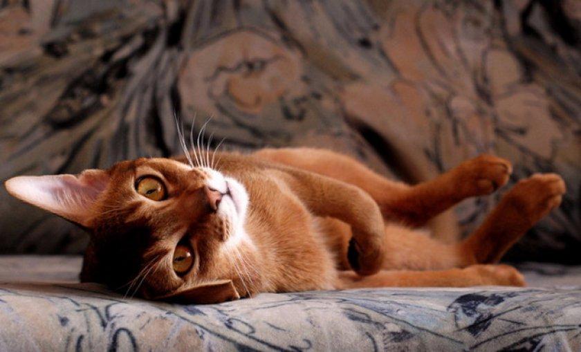 Избавляемся от запаха кошачьей мочи с дивана