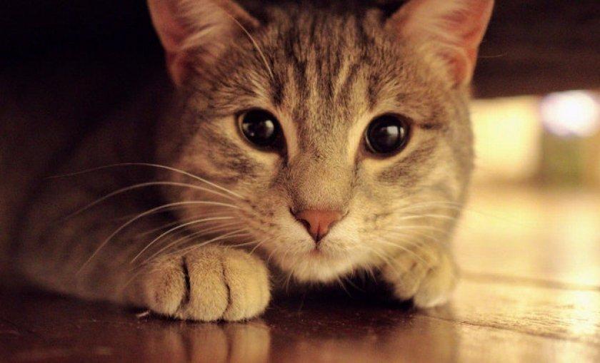 Избавляемся от запаха кошачьей мочи с пола