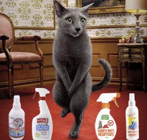 Почему кошка перестала ходить в лоток и что делать?