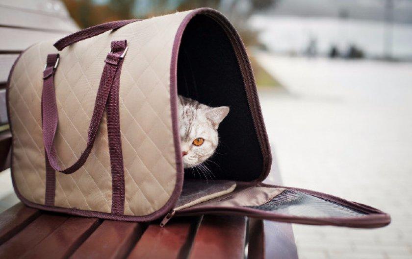 Кошка в переноске