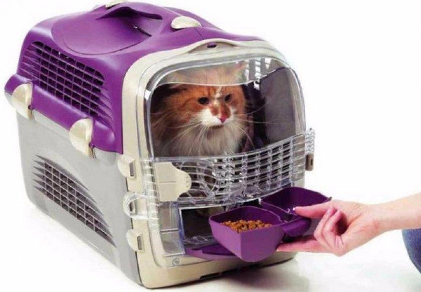 Кот в переноске