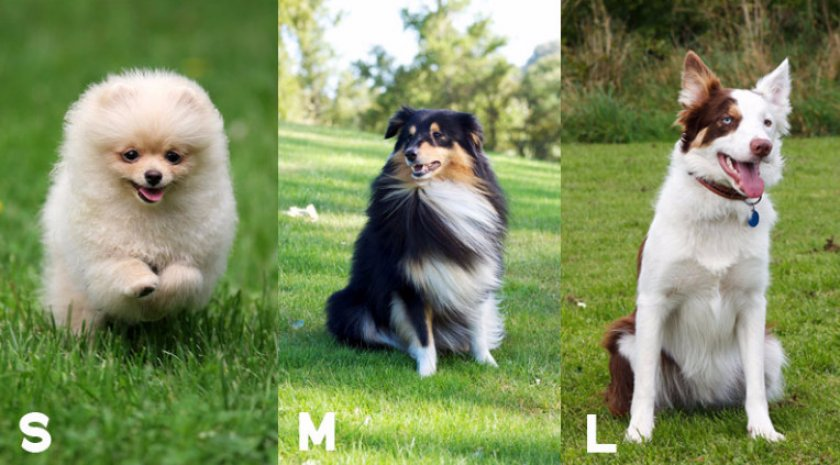 Категории собак