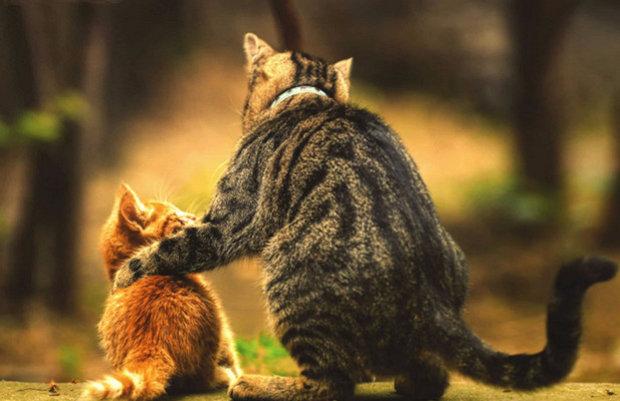 Два кота (кошки) в доме: развитие событий