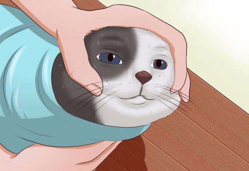 Как давать таблетку кошке