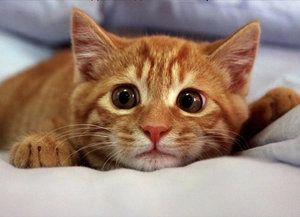 Особенности и периодичность течки у кошек
