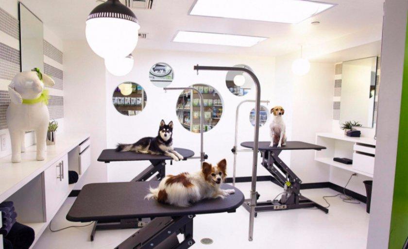 Салон для животных