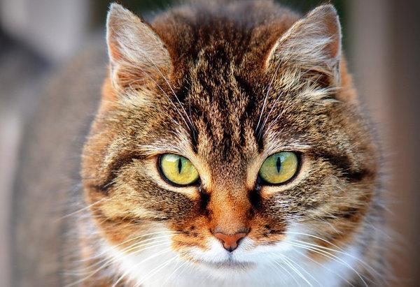 Интересные факты о домашних кошках