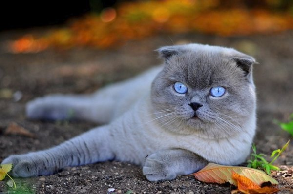 Какие бывают глисты у кошки, передаются ли они человеку и какие заболевания вызывают?