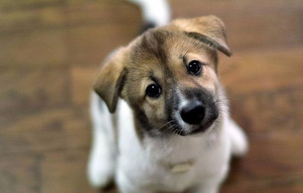 Дрессировка собак в домашних условиях для начинающих: с чего начать