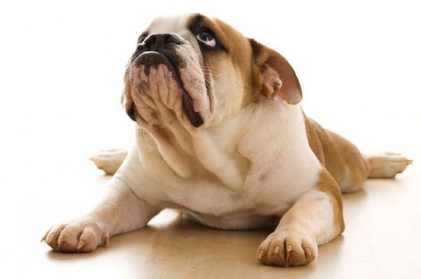 «Цестал» для собак