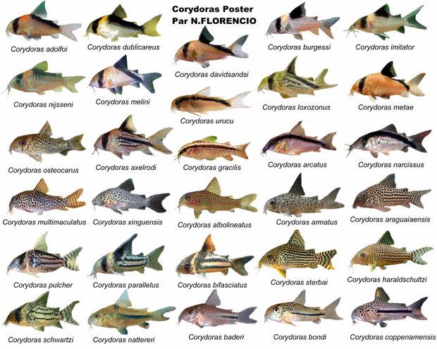 Разнообразие видов
