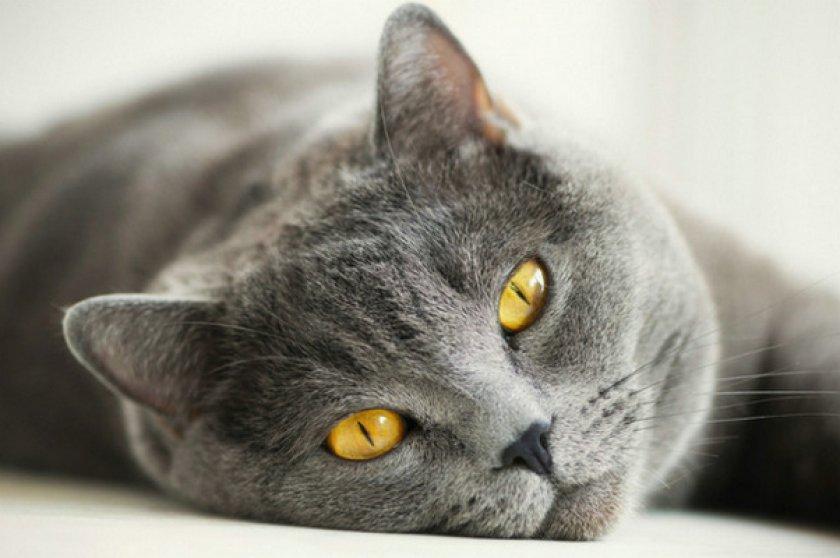 «Тронцил-К» для кошек