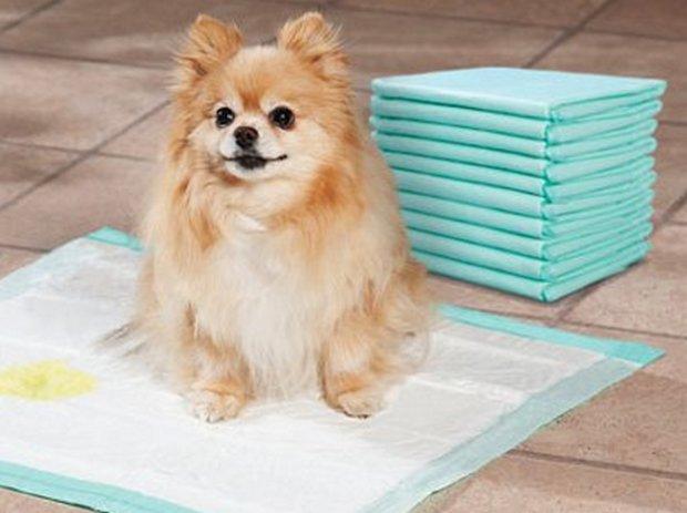 Как приучить щенка или собаку к лотку