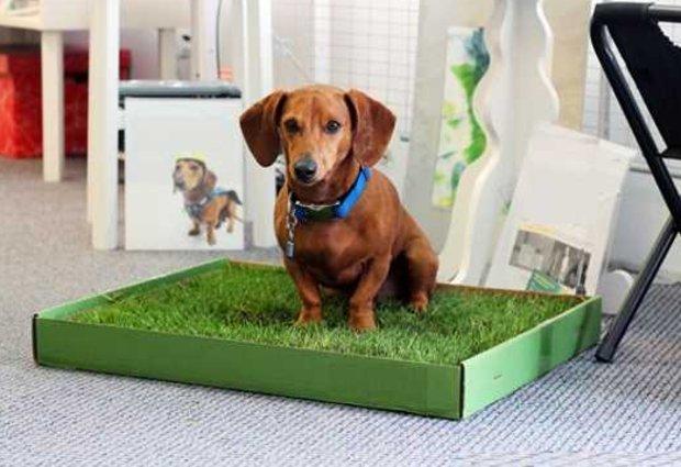 туалет для собаки