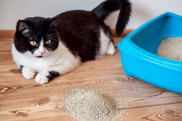Кот писает кровью причины симптомы и лечение