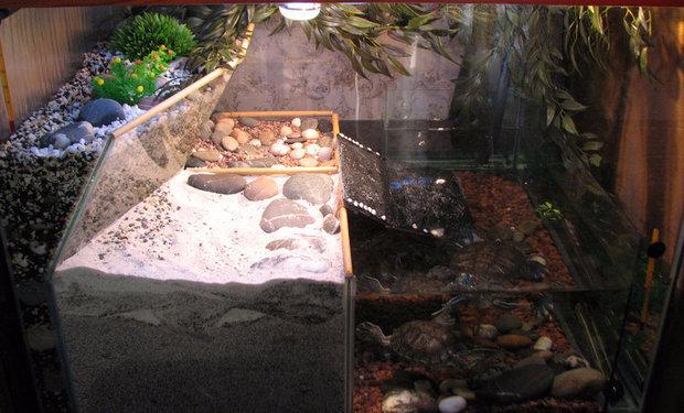 Акватеррариум для красноухих черепах своими руками