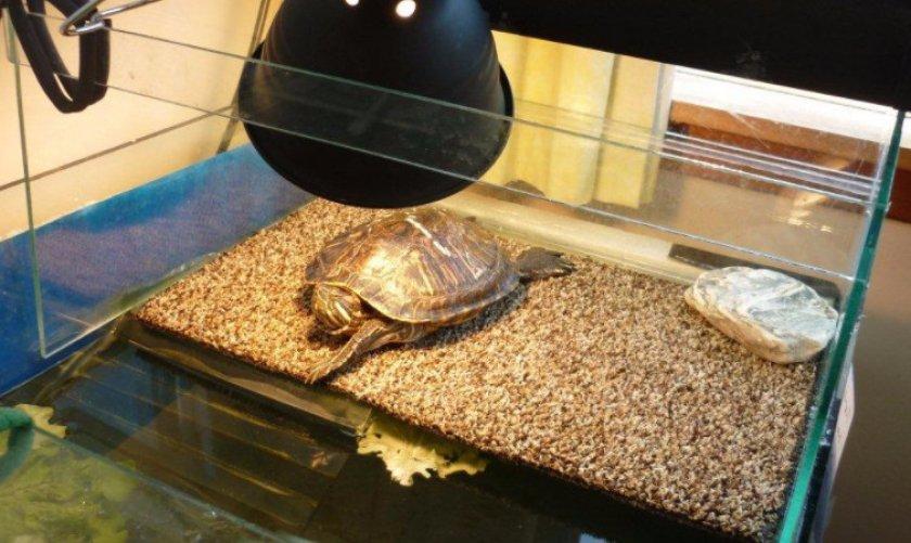 Световой режим для черепахи