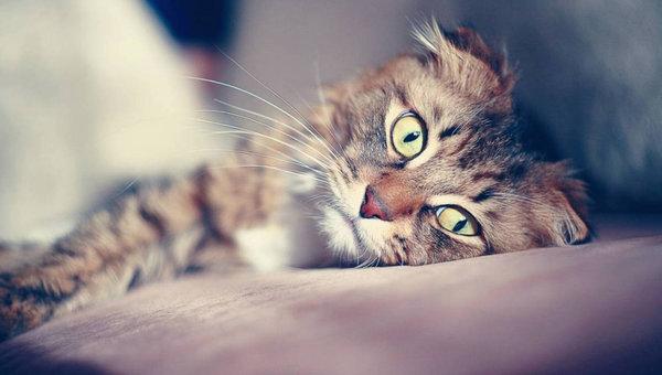 Липидоз печени у кошек — диагностика болезни, симптомы и лечение