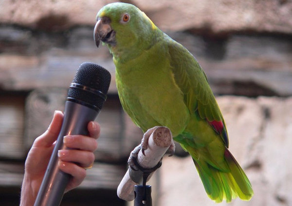 Какие попугаи самые умные