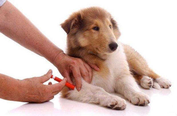 основные прививки для собак