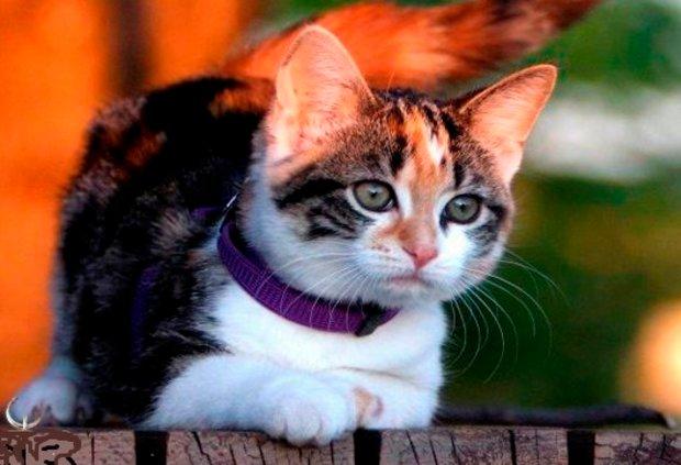 Ошейники для котов