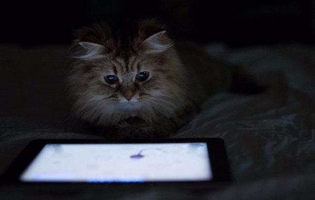 Видео для кота мышки