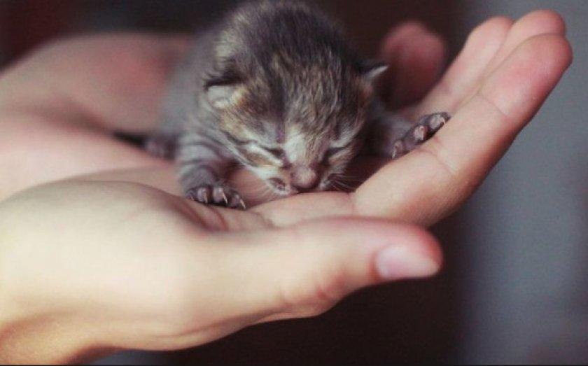 Почему котята рождаются слепыми?