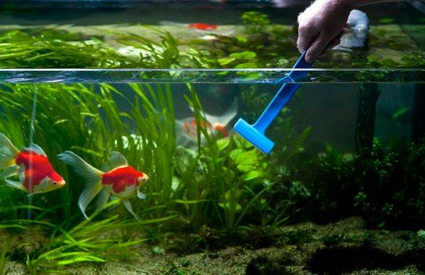 Как ухаживать за аквариумными растениями