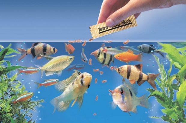 Осмотр рыбок при кормлении