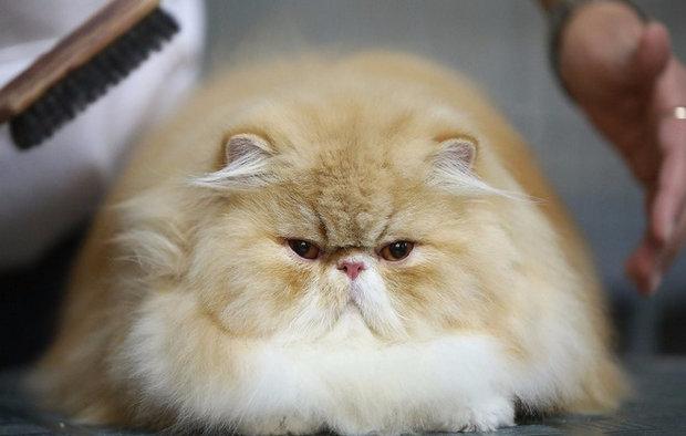 какие бывают породы кошек с фотографиями