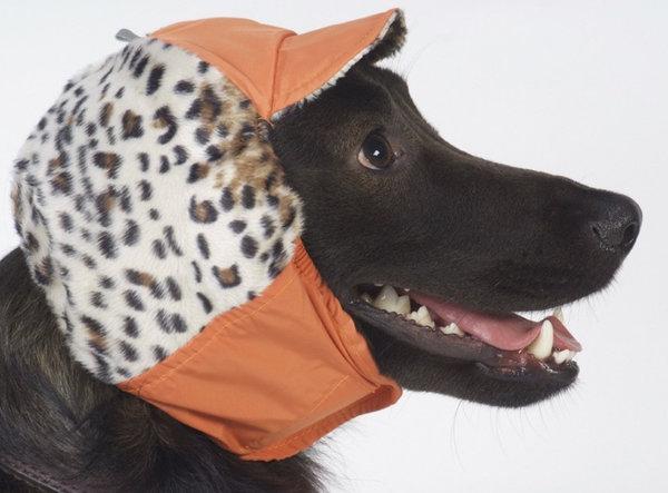 16462.p3iyk0.600 Как связать шапочку для собачки