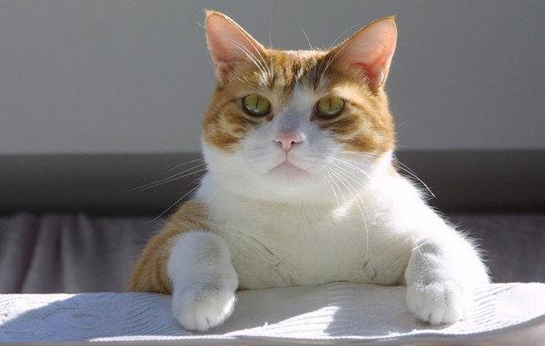 Еда для кошек своими руками рецепт с фото