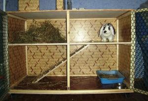 Как сделать клетку для декоративного кролика