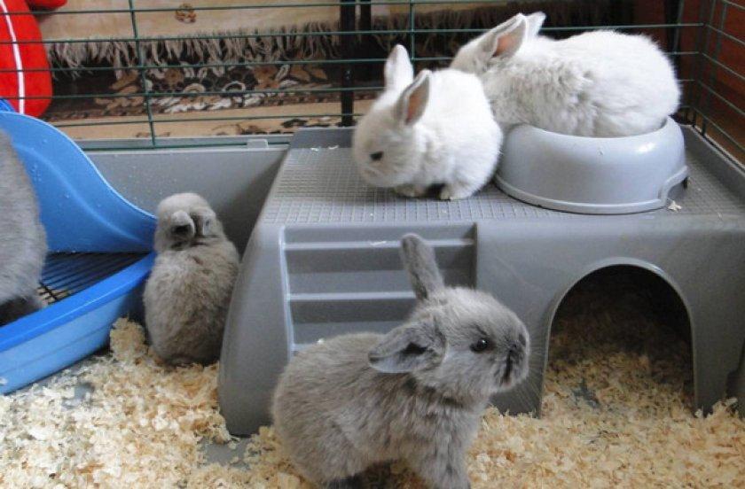 Особенности содержания декоративных кроликов
