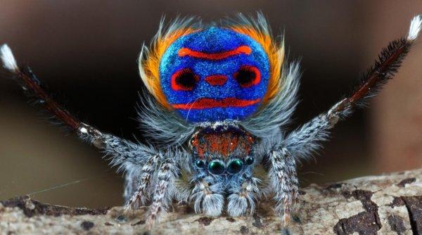 Что едят домашние пауки