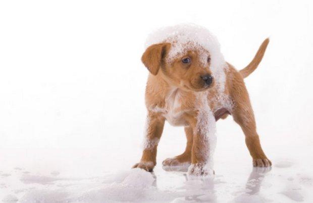 Можно ли мыть собаку человеческим шампунем