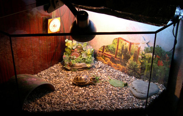 Террариум для сухопутной черепахи своими руками из оргстекла