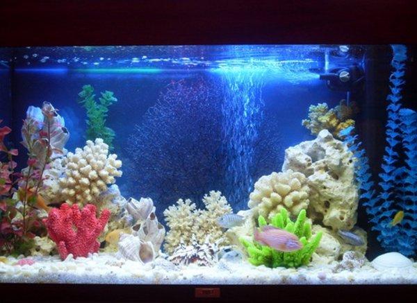 Как сделать аквариум своими руками в домашних условиях из огрстекла: делаем большой и красивый морской аквариум